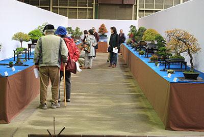 盆栽展2016