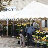菊花展2016