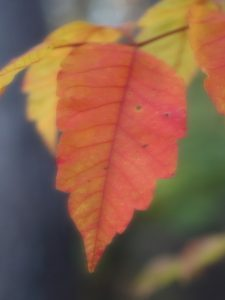 leaf_img_5637